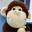 一只程序猿