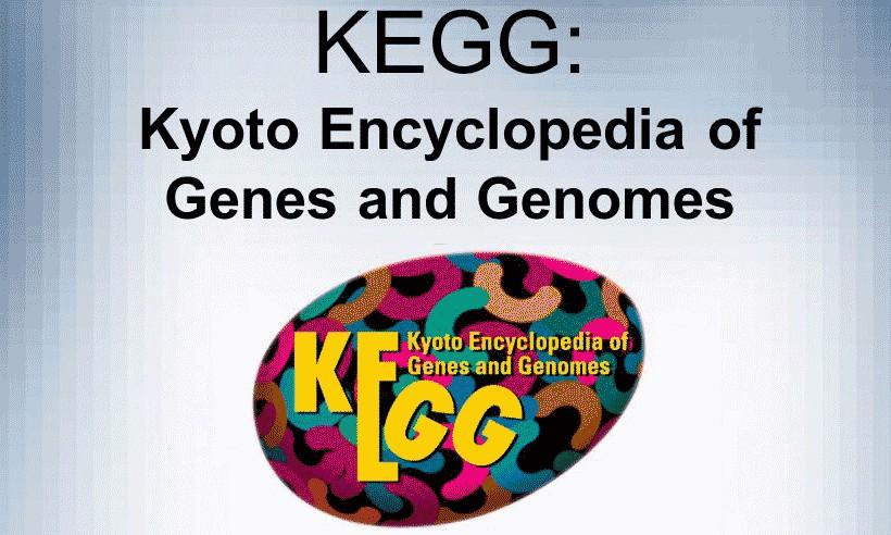 5分钟看懂KEGG代谢通路图
